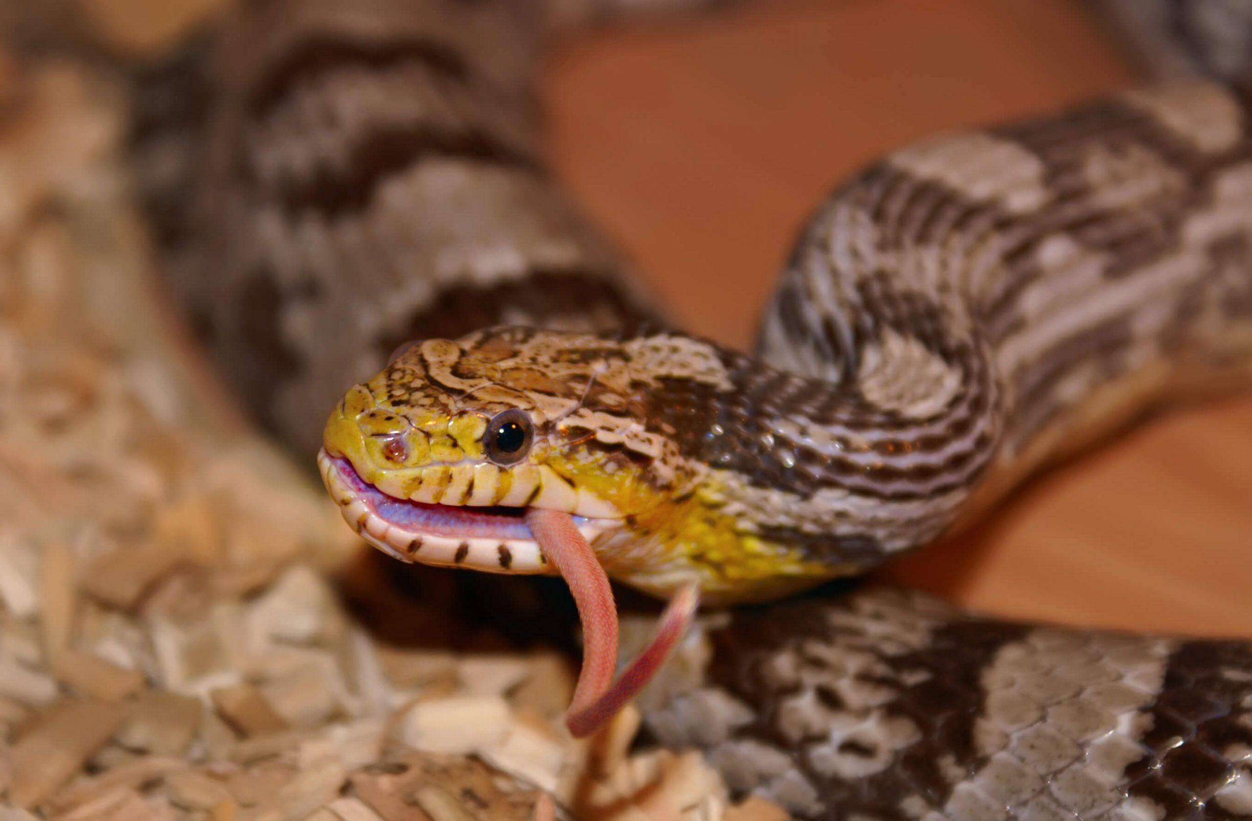 شركة مكافحة الثعابين في ابوظبي