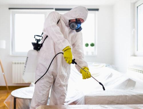 شركة مكافحة حشرات في راس الخيمة |0501021422| مبيدات