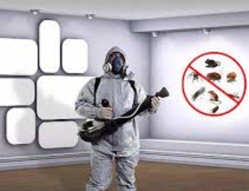 شركة مكافحة حشرات في دبي 0501021422  مكافحة الحشرات